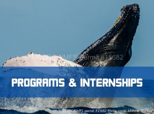Click to navigate to Field Intensive Programs & Internship Programs
