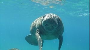 Feeding Ecology of Marine Mammals
